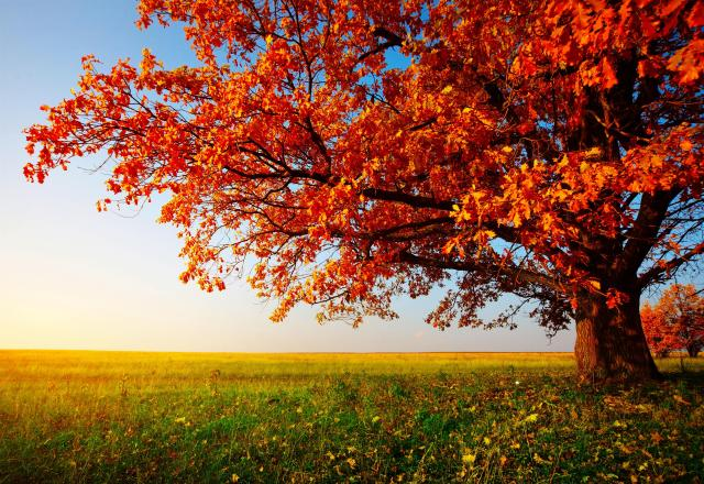 autumn-trees-desktop-wallpaper
