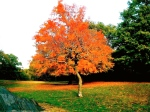 tree-within-tree-autumn